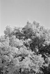 træ sort-hvid