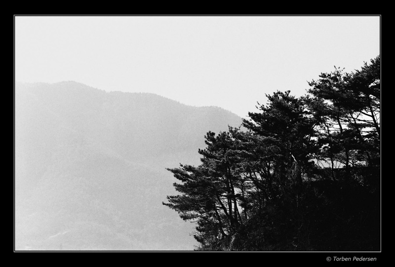 træer sydlige korea